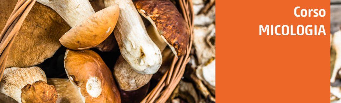 corso funghi