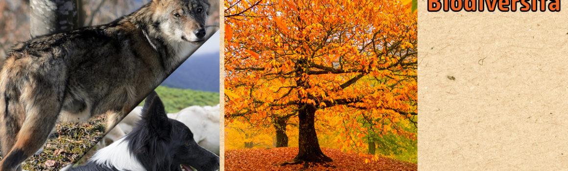 biodiversità parchi e aree protette